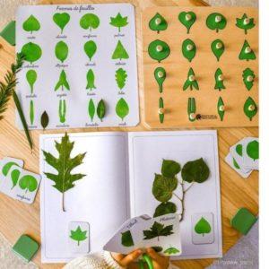 cabinet-botanique