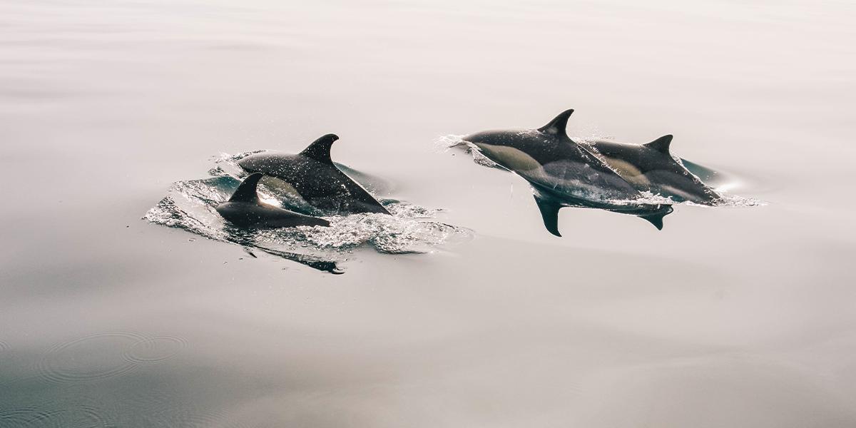 Sortie avec les dauphins